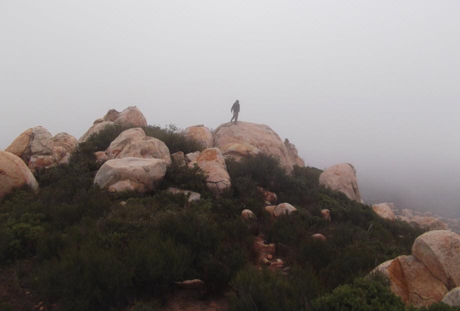 El Cajon Real Top