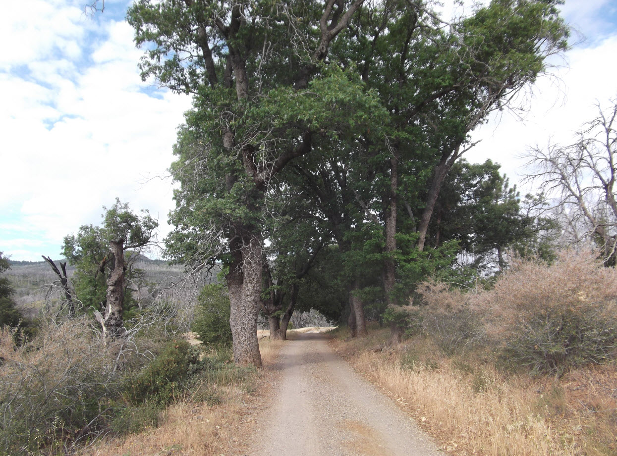 Milk Ranch Road