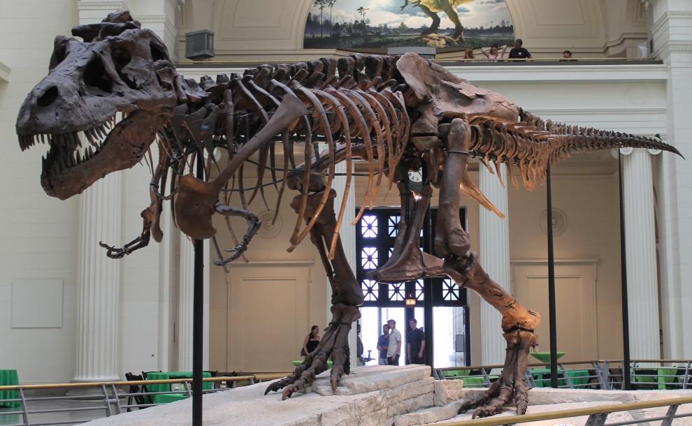 sue-skeleton-990x610