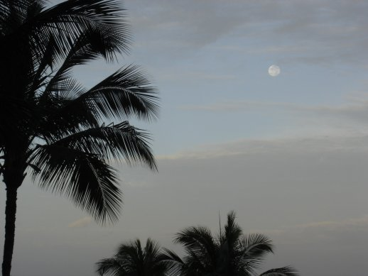moon-in-maui-small